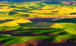 Χρωματισμένο Palouse στοκ φωτογραφία με δικαίωμα ελεύθερης χρήσης