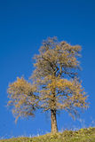 χρωματισμός φθινοπώρου Στοκ Εικόνα