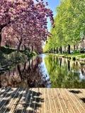 Χρόνος άνοιξη με τα άνθη και τα δέντρα στοκ φωτογραφία με δικαίωμα ελεύθερης χρήσης