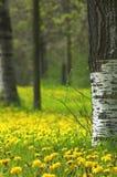 χρόνος άνοιξη Στοκ εικόνες με δικαίωμα ελεύθερης χρήσης