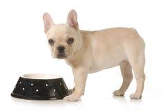 Χρόνος γευμάτων σκυλιών Στοκ φωτογραφία με δικαίωμα ελεύθερης χρήσης