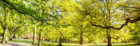 χρόνος Ουκρανία άνοιξη sofievka πάρκων uman Στοκ Φωτογραφίες