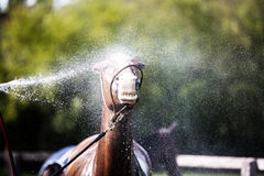 Χρόνος λουτρών για το άλογο Στοκ φωτογραφίες με δικαίωμα ελεύθερης χρήσης
