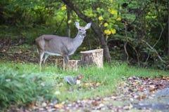 Χρόνος σίτισης για τα δασικά ζώα στοκ φωτογραφία