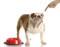 χρόνος σκυλιών γευμάτων Στοκ Φωτογραφία