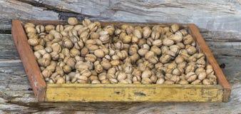 Χρόνος συγκομιδών ξύλων καρυδιάς στοκ φωτογραφίες με δικαίωμα ελεύθερης χρήσης