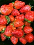 Χρόνος συγκομιδών φραουλών από το αγρόκτημα Στοκ εικόνα με δικαίωμα ελεύθερης χρήσης