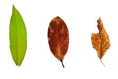 Χρόνος του φύλλου Στοκ Εικόνες
