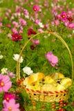 χρόνος τσαγιού κήπων ψωμι&omicron στοκ εικόνα