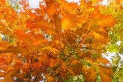 Χρόνος φθινοπώρου στο δάσος στοκ εικόνες