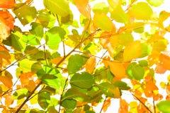 Χρόνος φθινοπώρου Στοκ φωτογραφίες με δικαίωμα ελεύθερης χρήσης