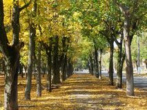Χρόνος φθινοπώρου Στοκ Εικόνες