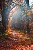 Χρόνος φθινοπώρου στοκ εικόνα