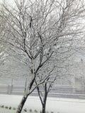 Χρόνος χιονιού στοκ φωτογραφίες με δικαίωμα ελεύθερης χρήσης