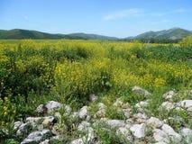Χρόνος Scythian Kurgan Στοκ Εικόνα