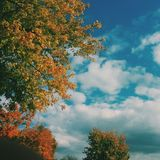 Χρώματα δέντρων πτώσης Στοκ Εικόνες