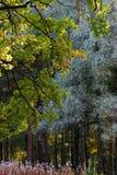 χρώματα δύο δάσος Στοκ Εικόνα
