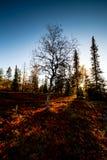 Χρώματα ηλιοβασιλέματος και φθινοπώρου Στοκ Εικόνα