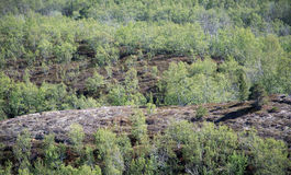 Χρώματα και δέντρα Στοκ Φωτογραφίες
