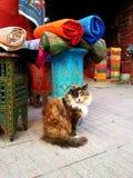 Χρώματα και γάτα Στοκ Εικόνες