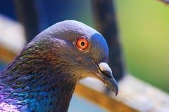 Χρώματα πετάγματος στοκ φωτογραφία με δικαίωμα ελεύθερης χρήσης