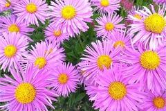 Χρώματα που εκρήγνυνται θαρραλέα εμπρός στοκ φωτογραφία με δικαίωμα ελεύθερης χρήσης