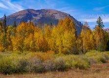 Χρώματα πτώσης βουνών Buffalo Στοκ φωτογραφίες με δικαίωμα ελεύθερης χρήσης