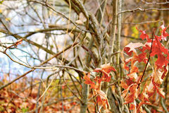 Χρώματα πτώσης σε ένα δάσος της Ιντιάνα Στοκ φωτογραφίες με δικαίωμα ελεύθερης χρήσης
