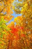 Χρώματα πτώσης σε ένα Midwest ίχνος στοκ φωτογραφίες