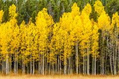 Χρώματα πτώσης στα βουνά του Κολοράντο Στοκ Εικόνες