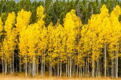 Χρώματα πτώσης στα βουνά του Κολοράντο Στοκ φωτογραφία με δικαίωμα ελεύθερης χρήσης