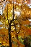 Χρώματα πτώσης στο Μόντρεαλ στοκ φωτογραφία με δικαίωμα ελεύθερης χρήσης