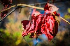 Χρώματα πτώσης της Αϊόβα Στοκ φωτογραφίες με δικαίωμα ελεύθερης χρήσης