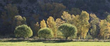 Χρώματα πτώσης φθινοπώρου με τα κίτρινα aspens στο Κολοράντο στοκ φωτογραφίες