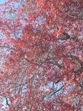 Χρώματα πτώσης στοκ εικόνα