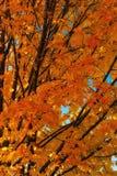 Χρώματα πτώσης Στοκ εικόνες με δικαίωμα ελεύθερης χρήσης