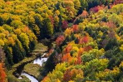 Χρώματα πτώσης Porcupine στα βουνά στοκ εικόνες