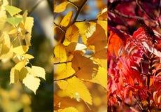Χρώματα της πτώσης Φωτογραφία κολάζ με τα κίτρινα και κόκκινα φύλλα φθινοπώρου στοκ εικόνα με δικαίωμα ελεύθερης χρήσης