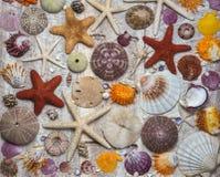 Χρώματα της Shell στο υπόβαθρο του ξύλου Στοκ Εικόνες