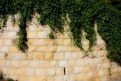Χρώματα του Ισραήλ Στοκ φωτογραφία με δικαίωμα ελεύθερης χρήσης