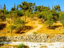 Χρώματα του Ισραήλ Στοκ εικόνες με δικαίωμα ελεύθερης χρήσης