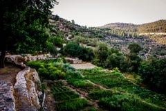 Χρώματα του Ισραήλ Στοκ Εικόνες
