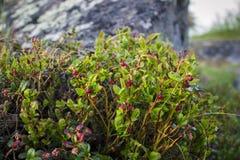 Χρώματα του ρωσικού Βορρά Στοκ φωτογραφία με δικαίωμα ελεύθερης χρήσης