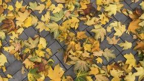 Χρώματα του φθινοπώρου Κίτρινα φύλλα σε ένα πάρκο πόλεων επάνω από την όψη απόθεμα βίντεο