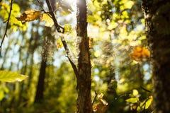 Χρώματα του φθινοπώρου, ξύλο με τον Ιστό αραχνών ενάντια ανασκόπησης μπλε σύννεφων πεδίων άσπρο σε wispy ουρανού φύσης χλόης πράσ στοκ εικόνες με δικαίωμα ελεύθερης χρήσης
