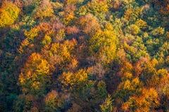 Χρώματα του φθινοπώρου στο δάσος Στοκ Φωτογραφία