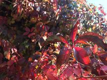 Χρώματα του φθινοπώρου στοκ φωτογραφίες