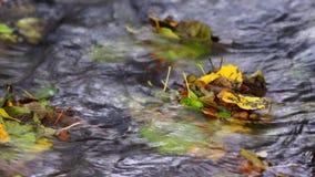 Χρώματα του φθινοπώρου απόθεμα βίντεο