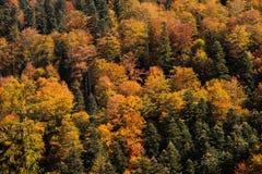 Χρώματα του φθινοπώρου Στοκ Φωτογραφία