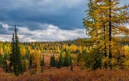 Χρώματα του φθινοπώρου Στοκ Εικόνα